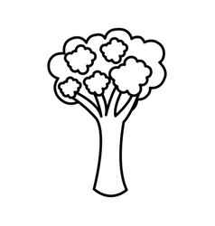 silhouette vegetable broccoli icon vector image vector image