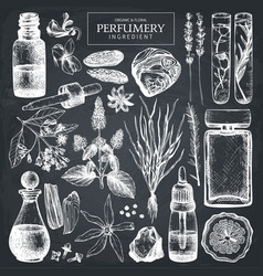 hand drawn perfumery ingredients sketch vector image