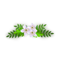 Spring pink flowers with leaves pattern vector