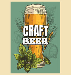 beer poster glass hop barley vintage style vector image