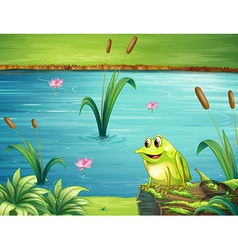 A frog at the riverbank vector