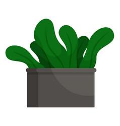 houseplant big leaves in pot indoor symbol vector image