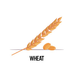 Wheat ear with dried whole grains organic healthy vector