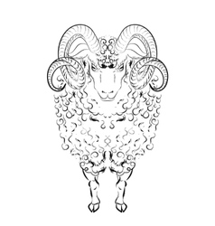Sheep with long wool locks and curved horns vector image