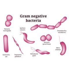 Arrangements of gram negative bacteria vector
