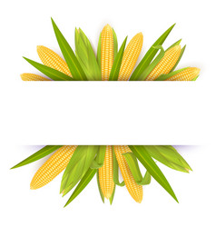 corn frame card template realistic vector image