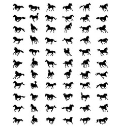 Horses in galloping vector