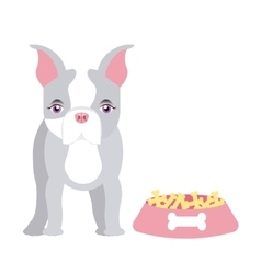 pet service design vector image