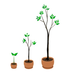 Tree growing vector