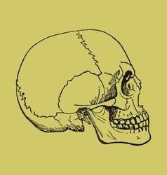 Razum vector image