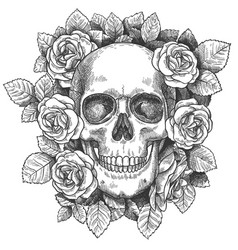 skull with flowers sketch human skull with roses vector image