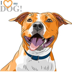 sketch smiling dog American Staffordshire Terrier vector image vector image