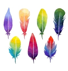 watercolor feather set vector image