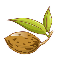 almond nut icon cartoon style vector image