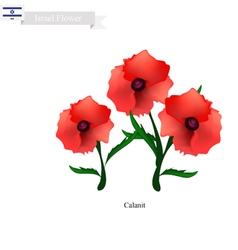 Calanit Flower The National Flower of Israel vector image