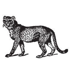 Cheetah vintage vector