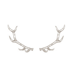 elegant deer or reindeer antlers hand drawn with vector image