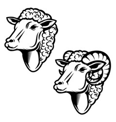 Set of sheep head ram head design element for vector
