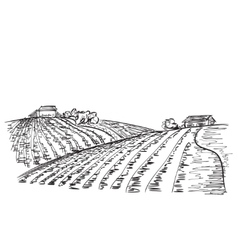 Landscape with Fields vector image vector image