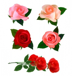 big set with beauty roses vector image vector image