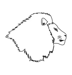 Head lion african proud powerful nobility vector