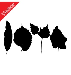 Set of silhouettes of leaves of trees and flowers vector image