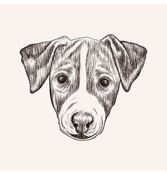 Sketch Jack Russell Terrier Dog Hand drawn face vector