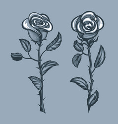 Two roses with thorns monochrome tattoo style vector