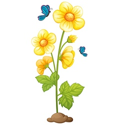 A flowering plant vector image vector image