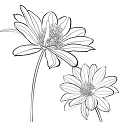 Template for card with Gerber flowers vector image