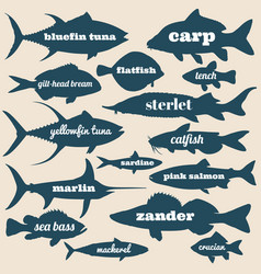 ocean fish silhouettes with names isolated vector image