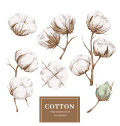 cotton plant collection vector image