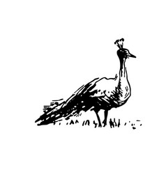 hand drawn sketch of peacock bird black on white vector image