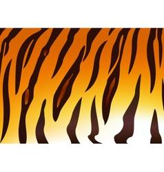 Tiger skins vector