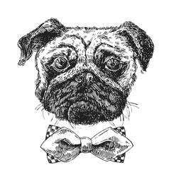hand drawn sketch dog vector image vector image
