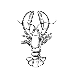 Big atlantic lobster with raised claws vector image vector image