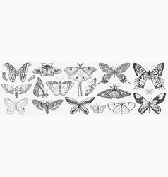 butterfly or wild moths insects mystical symbol vector image