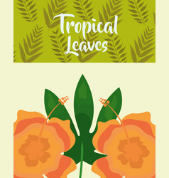 tropical leaves hibiscus flower exotic fashion vector image
