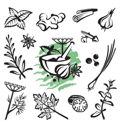 herbs and spices vector image vector image
