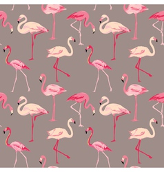 Flamingo Bird Background vector image vector image