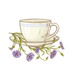 cornflower tea vector image