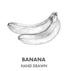 Sketch of banana Hand drawn Fruit collection vector image