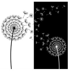 black and white dandelion blowing vector image