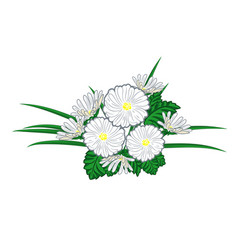 bouquet of chamomiles and daisies vector image vector image