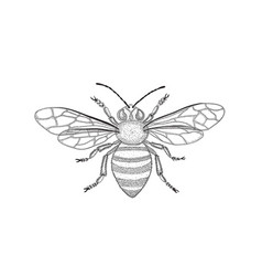 black and white honey bee with spread wings in vector image