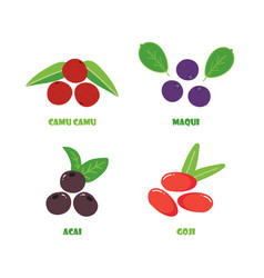 Camu camu maqui acai and goji berries vector