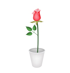 A Beautiful Red Rose in Flower Pot vector image