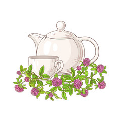 clover tea vector image