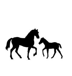 Horse and foal farm mammal black silhouette animal vector