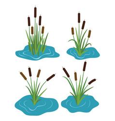 set typhaceae marsh herb vector image